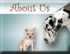 About our Pet Salon